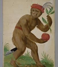 ©Artigianato locale, TiroloCarte da gioco con raffigurazione di scimmie, 1580 ca.Tinte opache, acquarello su carta, montato su cartoncino,515 x 415 mmVienna, Kunsthistorisches Museum, Kunstkammer
